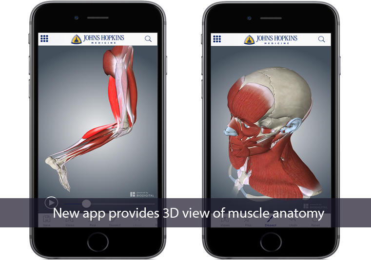 Navigate Health And Career New App For Muscle Anatomy Are Print